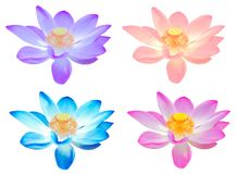 Το ζωηρόχρωμο λουλούδι λωτού συλλογής για διακοσμεί απομονωμένος Στοκ Φωτογραφία