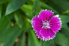 Το ζωηρόχρωμο λουλούδι στο gar κρησφύγετο με το πράσινο υπόβαθρο Στοκ εικόνα με δικαίωμα ελεύθερης χρήσης