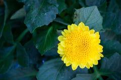 Το ζωηρόχρωμο λουλούδι στο gar κρησφύγετο με το πράσινο υπόβαθρο Στοκ Εικόνες