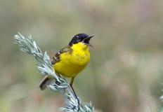 Το ζωηρόχρωμο πουλί την άνοιξη στοκ εικόνες