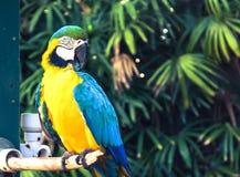 Το ζωηρόχρωμο πουλί Macaw στον κλάδο στοκ εικόνες