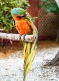 Το ζωηρόχρωμο πουλί Macaw στον κλάδο στοκ φωτογραφίες