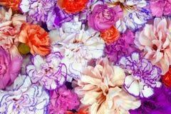 Το ζωηρόχρωμο υπόβαθρο ανθοδεσμών λουλουδιών φιαγμένο από ζωηρόχρωμο γαρίφαλο ανθίζει τον τοίχο για το υπόβαθρο και την ταπετσαρί στοκ φωτογραφίες με δικαίωμα ελεύθερης χρήσης