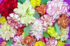 Το ζωηρόχρωμο υπόβαθρο ανθοδεσμών λουλουδιών φιαγμένο από ζωηρόχρωμο γαρίφαλο ανθίζει τον τοίχο για το υπόβαθρο και την ταπετσαρί στοκ φωτογραφία με δικαίωμα ελεύθερης χρήσης