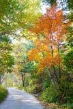 Το ζωηρόχρωμο φθινοπωρινό τοπίο πορειών δασών και απατεώνων _ Στοκ φωτογραφίες με δικαίωμα ελεύθερης χρήσης