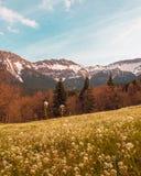Το ζωηρό βουνό χρωμάτων ολοκληρώνει άποψης τη χιονώδη άποψης ουρανού ελευθερία σαφήνειας λιβαδιών δασική στοκ φωτογραφίες