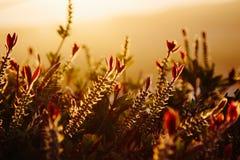Το ηλιοβασίλεμα ανθίζει σε βάθος Στοκ εικόνες με δικαίωμα ελεύθερης χρήσης
