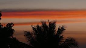 Το ηλιοβασίλεμα χρονικού σφάλματος, ανατολή στη ζούγκλα, σκιαγραφίες του φοίνικα, φωτεινά cirrus καλύπτει απόθεμα βίντεο