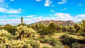 Το ημι τοπίο ερήμων του πάρκου Reginal βουνών Usery με πολλούς κάκτους Saguaru, Cholla και βαρελιών Στοκ εικόνα με δικαίωμα ελεύθερης χρήσης
