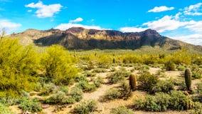 Το ημι τοπίο ερήμων του περιφερειακού πάρκου βουνών Usery με πολλούς κάκτους Octillo, Saguaru, Cholla και βαρελιών Στοκ Φωτογραφία