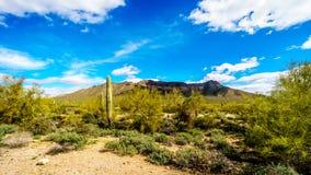 Το ημι τοπίο ερήμων του περιφερειακού πάρκου βουνών Usery με πολλούς κάκτους Octillo, Saguaru, Cholla και βαρελιών Στοκ Φωτογραφίες
