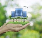 Το ηλιακό κύτταρο στο άτομο παραδίδει το πράσινο δέντρο θαμπάδων με τα πουλιά, Ecologi Στοκ Εικόνες