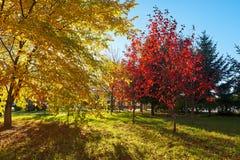 Το ηλιοβασίλεμα δέντρων φθινοπώρου Στοκ φωτογραφία με δικαίωμα ελεύθερης χρήσης