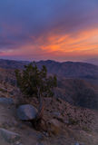 Το ηλιοβασίλεμα κλειδώνει την άποψη, εθνικό πάρκο δέντρων του Joshua Στοκ Φωτογραφία