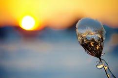 Το ηλιοβασίλεμα του χειμώνα Στοκ Εικόνα