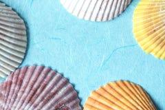 Το θαλασσινό κοχύλι διακοσμεί σε μπλε χαρτί, φρέσκια μπλε πλάτη θερινών σχεδίων Στοκ Εικόνες