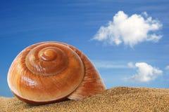 το θαλασσινό κοχύλι στοκ εικόνες