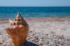 Το θαλασσινό κοχύλι βρίσκεται στις ακτές ενάντια σε μια θολωμένη μπλε θάλασσα Στοκ εικόνες με δικαίωμα ελεύθερης χρήσης