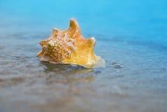 Το θαλασσινό κοχύλι στην άμμο της παραλίας στον ήλιο, υπόβαθρο, κλείνει επάνω Στοκ φωτογραφία με δικαίωμα ελεύθερης χρήσης