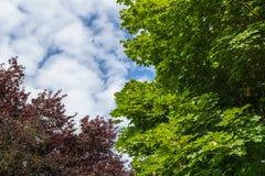 Το θερινό δέντρο ολοκληρώνει το φύλλωμα με το μπλε ουρανό και τα σύννεφα Στοκ Εικόνα