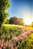 Το θερινό τοπίο με την άνθιση τα λουλούδια Στοκ εικόνα με δικαίωμα ελεύθερης χρήσης