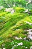 Το θερινό τοπίο του βουνού Luya Στοκ εικόνα με δικαίωμα ελεύθερης χρήσης
