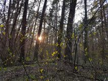 Το θερμό βράδυ, ήλιος λάμπει μέσω των κλάδων των δέντρων και backlights των πολυάριθμων πρασινωπών νέων φύλλων στοκ φωτογραφία