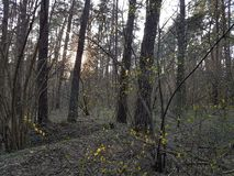 Το θερμό βράδυ, ήλιος λάμπει μέσω των κλάδων των δέντρων και backlights των πολυάριθμων πρασινωπών νέων φύλλων στοκ εικόνες με δικαίωμα ελεύθερης χρήσης