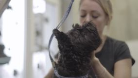 Το θηλυκό κατοικίδιο ζώο groomer καθαρίζει τα αυτιά του μαύρου σκυλιού στο σαλόνι groomers Επαγγελματική ζωική προσοχή στην κλινι απόθεμα βίντεο