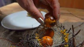 Το θηλυκό χέρι παίρνει τα αυγά ορτυκιών από ένα άσπρο πιάτο απόθεμα βίντεο