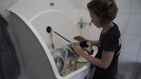 Το θηλυκό groomer τυλίγει το σκυλί στην ταινία τεντωμάτων φιλμ μικρού μήκους
