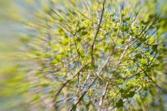Το θολωμένο καλλιτεχνικό δέντρο διακλαδίζεται και βγάζει φύλλα Στοκ Εικόνες
