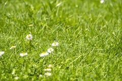 Το θολωμένο πράσινο θερινό υπόβαθρο με τα λουλούδια μαργαριτών και την πράσινα χλόη και το νερό ρίχνει το πέταγμα Στοκ εικόνα με δικαίωμα ελεύθερης χρήσης