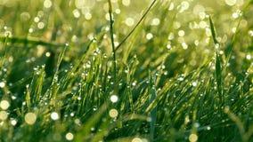 Το θολωμένο πράσινο υπόβαθρο χλόης με τη δροσιά πτώσεων και πρωινού νερού κοντά επάνω βλέπει απόθεμα βίντεο