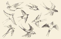 Το διάνυσμα πουλιών πετάγματος, χέρι που σύρεται, σκίτσο Στοκ Φωτογραφία