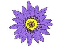 Το διάνυσμα του πορφυρού Lotus Στοκ φωτογραφία με δικαίωμα ελεύθερης χρήσης