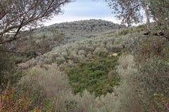 Το διάσημο Olivewood (Μαυροβούνιο, Ulcinj, χειμώνας) Στοκ εικόνες με δικαίωμα ελεύθερης χρήσης