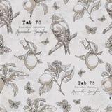 Το διανυσματικό σχέδιο με το πουλί, λεμόνι διακλαδίζεται, μήλο, φύλλα, πεταλούδα Στοκ Εικόνες