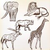 Το διανυσματικό σύνολο χεριού που σύρθηκε απαρίθμησε τα αφρικανικά ζώα με το calligra Στοκ εικόνες με δικαίωμα ελεύθερης χρήσης