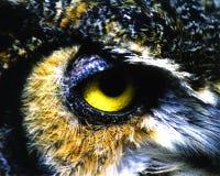 Το διαπεραστικό κίτρινο μάτι μιας κουκουβάγιας Στοκ εικόνες με δικαίωμα ελεύθερης χρήσης