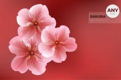 Το ιαπωνικό κόκκινο υπόβαθρο ύφους με τον κλάδο και τα ρόδινα λουλούδια του sakura Στοκ φωτογραφία με δικαίωμα ελεύθερης χρήσης