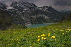 Το λιβάδι ανθίζει κοντά στη λίμνη Oeschinensee, Ελβετία Στοκ Εικόνες