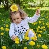 Το λιβάδι μικρών κοριτσιών συλλέγει την κίτρινη πικραλίδα στοκ φωτογραφία