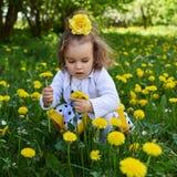 Το λιβάδι μικρών κοριτσιών συλλέγει την κίτρινη πικραλίδα στοκ εικόνες