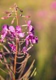 το λιβάδι λουλουδιών αναπηδά κάπου τα δάση Στοκ Εικόνες