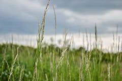 το λιβάδι χλόης ιδανικά χρησιμοποιεί το σας Φυσώντας λεπίδες κάμψεων αέρα της χλόης στον τομέα Στοκ Εικόνα
