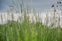 το λιβάδι χλόης ιδανικά χρησιμοποιεί το σας Φυσώντας λεπίδες κάμψεων αέρα της χλόης στον τομέα Στοκ Εικόνες