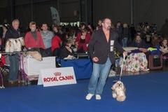 Το διεθνές σκυλί παρουσιάζει δίδυμο CACIB στο Μπρνο Στοκ φωτογραφία με δικαίωμα ελεύθερης χρήσης