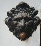 Το λιοντάρι τραγουδά στοκ εικόνες