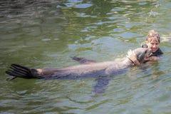 Το λιοντάρι ‹â€ ‹θάλασσας †φιλά το κορίτσι Στοκ εικόνες με δικαίωμα ελεύθερης χρήσης